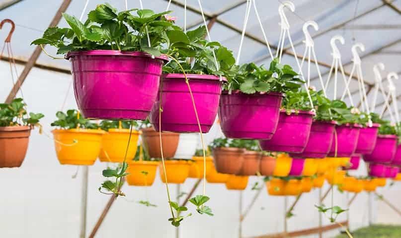 Stādīsim balkona kastes 2. daļa Ziedi VS Dārzeņi