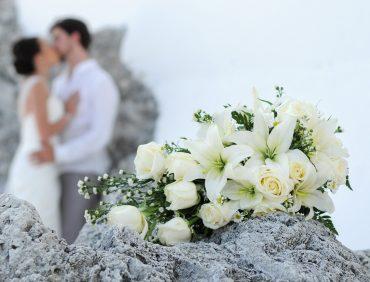 Kāzu Lilijas – īpaši skaistas Liliju šķirnes kāzu dienai