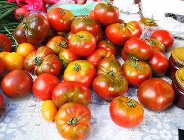 Šķirnes tomāti – biežākie aizspriedumi par delikatešu tomātiem