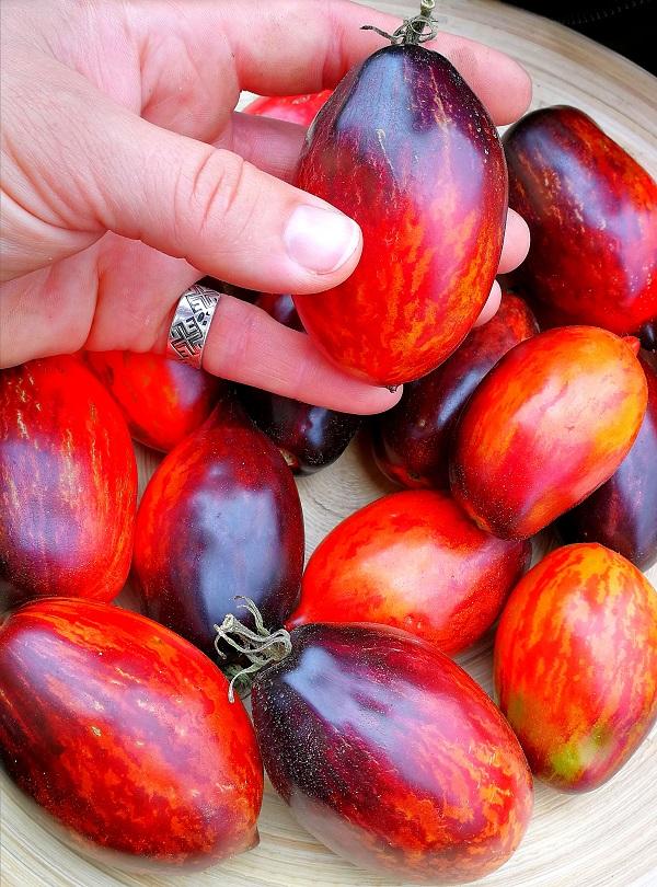Gargamel tomātu šķirne